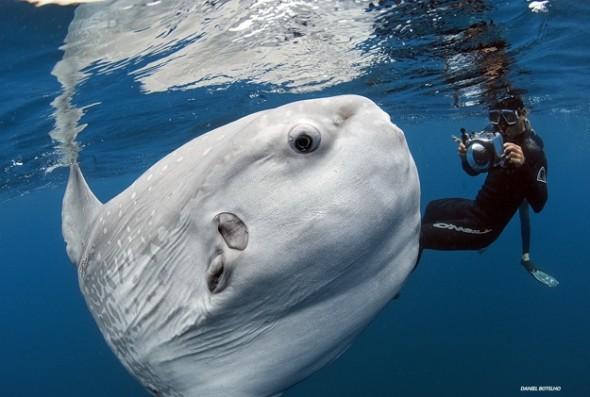 Finish Along Quarter 1 Tutorial Week – Mola Style Applique With Amanda Millar