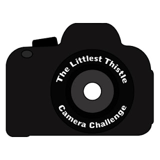 Camera Challenge 7 – Using Natural Light Outdoors